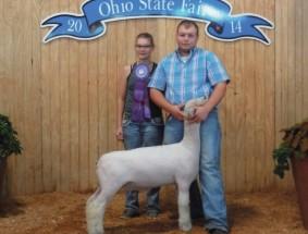 Adam Heffelfinger- Champion Southdown Market Lamb – Ohio State Fair