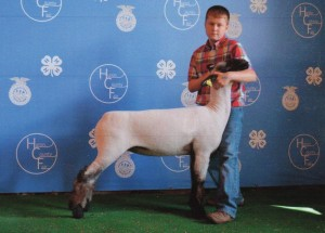 Austin Hunker- Champion Ewe- Huron Co. OH Fair