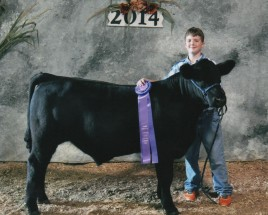 Chase Barstow- Champion Bull- Stark County OH Fair