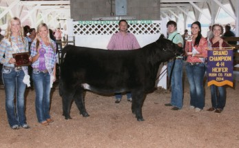 Cody Dawson- Champion Heifer- Rush Co IN Fair