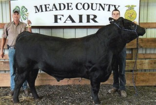 Cody Haught- Champion Bull- Meade Co. KY Fair
