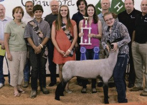 Emily Rudd- Champion Market Lamb- Crawford Co. Ohio Fair