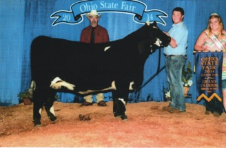 Garret Stanfield- Champion Simmental Influenced Female- Ohio State Fair