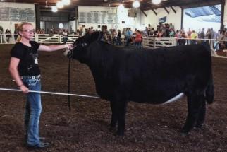 Hailey Hedrick- Champion Heifer- Hancock Co IN Fair