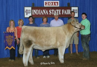 Jake Newson- Champion Charlolais Steer- IN State Fair