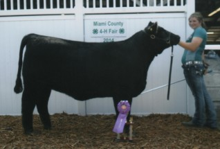 Jen Miller- Champion Heifer- Miami Co IN Fair