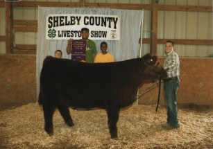 Kolton Raizor- Champion Steer- Shelby Co KY Fair