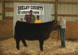 Kolton Raizor- Champion Steer- Shelby Co KY Fair