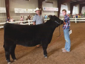 Nick McConnell- Champion Heifer- Hartford Ind OH Fair