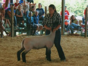 Paris- Champion Ewe- Warrick County IN Fair
