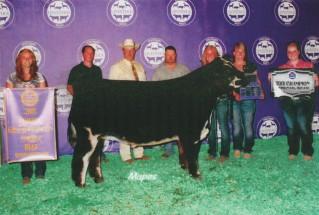 Taylor Bolinger- Reserve Champion Steer- Michigan Livestock Expo