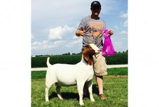 15-ChampionDoe-IllinoisStateFairJr.Show-MichaelWetherell