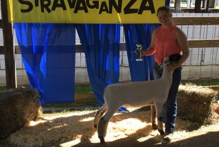 15-GrandChampionMarketLamb-LarueCountyFair-TaylorGraves