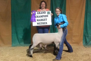 15-GrandChampionMarketWether-StJosephCountyFair-CarissaSears