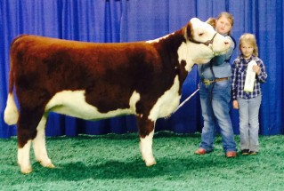 15-SupremeChampionHEifer-PerryCounty4H-BaileyPearl