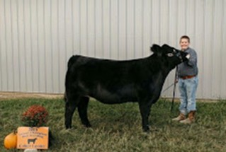 15-Supremechampionheifer-BelmontCountyFair-ColtenLuyster