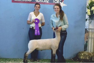 15-championmarketlamb-illinoisstatefair-AbigailCritchelow