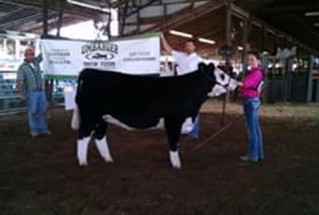 15-grandchampheifer-galliacountyfair-Erin-Pope