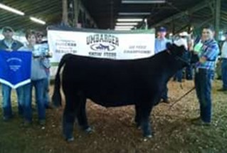 15-grandhchampmarketsteer-galliacountyfair-Jordan-Johnson