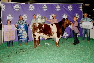 16-champshorthorn&4thoverall-michiganlivestockexpocaludiaalrecht