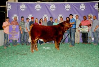 16-reservegrandsteer-michiganlivstockexpo-nickboerson