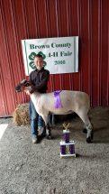 caleb-grand-champion-ewe