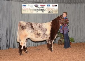 emma-mathews-2016-champion-shorthorn-oca-best-program