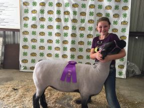 katie-fair-2016-champ-breeding-ewe