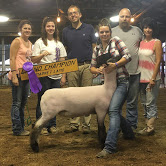 paxton-grand-champion-lamb