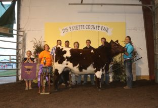 victoria-waits-2016-champion-steer-fayette-county