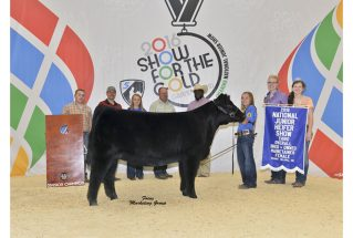 16-3rdoverallheifer-nationalchi_mainejrshow-brookehayden