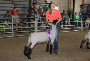 16-grandchamp-lenaweecountyfair-shelbywagner