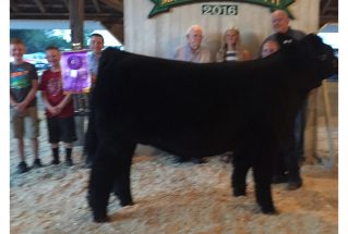 16-grandchampion-madisoncounty4hfair-cagneyutterback