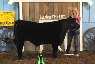 16-grandchampmarketsteer-williamscountyfair-carleymuehfled