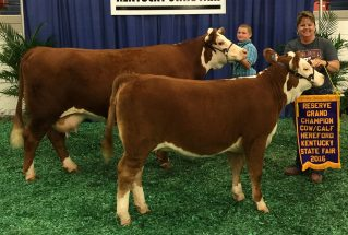 16-reservegrandchampheifer-kentuckystatefair-ryanunderwood