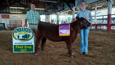 addy-cottril-grand-heifer-mason