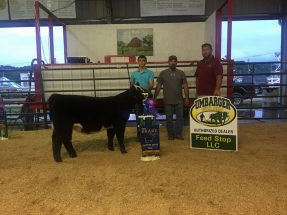 markie-norris-grand-breeding-heifer-lawrence