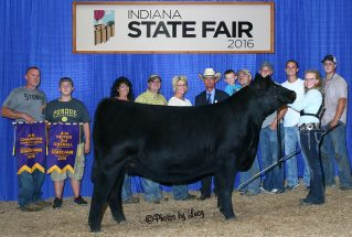 3rd-overall-heifer-indiana
