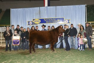 alyssa-deporter-junior-champion-red-angus-h-nwss
