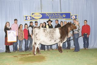 claire-trenapohl-junior-reserve-champion-shorthorn-h-nwss