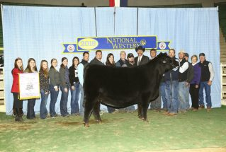 dameron-angus-open-reserve-angus-h-nwss