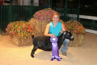makenahrohrgrandchampionpygmygoatdoestarkcountyfair2017