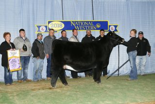 meghan-reed-junior-show-champion-simmental-h-nwss