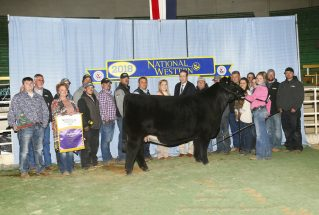 meghan-reed-open-show-champion-simmental-h-nwss