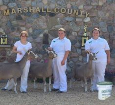 rebekahjohnsonsupremechampionmilkingdoemarshallcounty4hshow-1