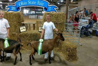 rsz_keeton_ables_c_dairy_goat_oh_sf