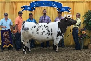 KateHornyak_GC_Shorthorn_MS_OH_SF_977x658