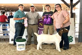 AllisonWheeler_GC_Comm_Doe_MorganCF4-H_977x658