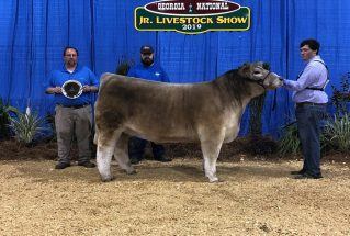 ParkerAusley_ReserveChampionChiInfluenceSteer_GeorgiaNationaJrLivestockShow_977x658