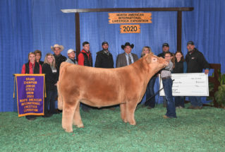 Rhylee_Rodgers_Champ_Steer_NAILE_977x658